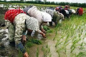 طرح توسعه خوشه صنعتی سازندگان ادوات شالیکوبی در استان گیلان