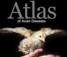 بیماری های طیور