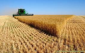 اکولوژی زراعی