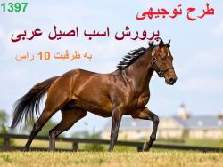 طرح توجیهی پرورش اسب اصیل عربی به ظرفیت 10 راس سال 1397