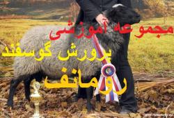 مجموعه آموزشی پرورش گوسفند رومانف