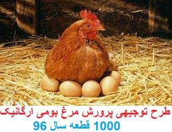 طرح توجیهی پرورش مرغ بومی به صورت ارگانیک در سال 96